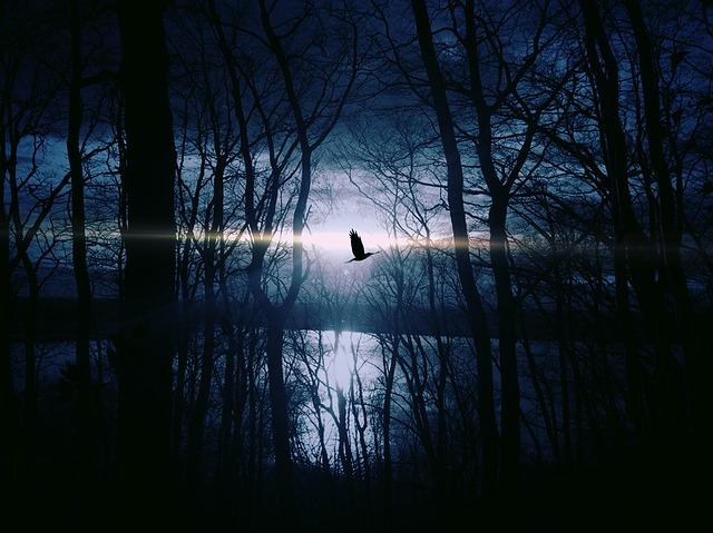 noční pták