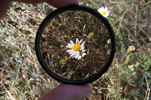 přírodní květ