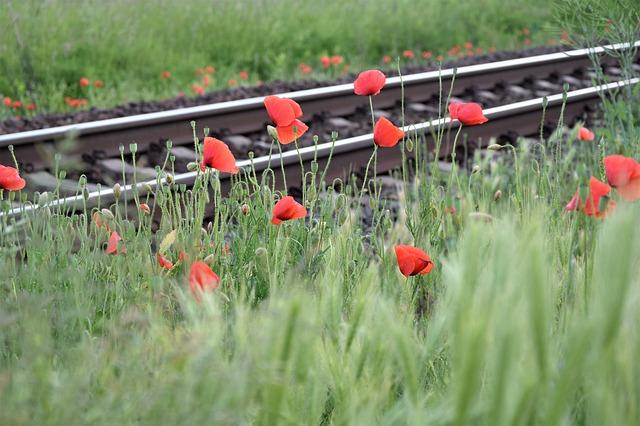 červený mák v blízkosti železniční trati.jpg