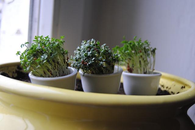 pokojové rostlinky